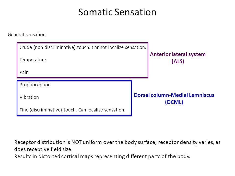 Anterior Lateral System (ALS) General sensation.Crude (non-discriminative) touch.