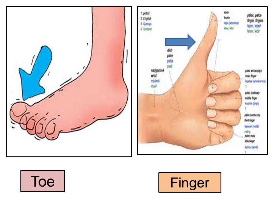 Toe Finger