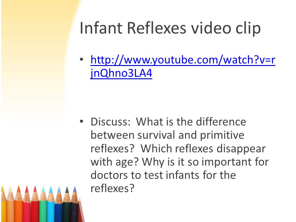Worksheet: Reflexes