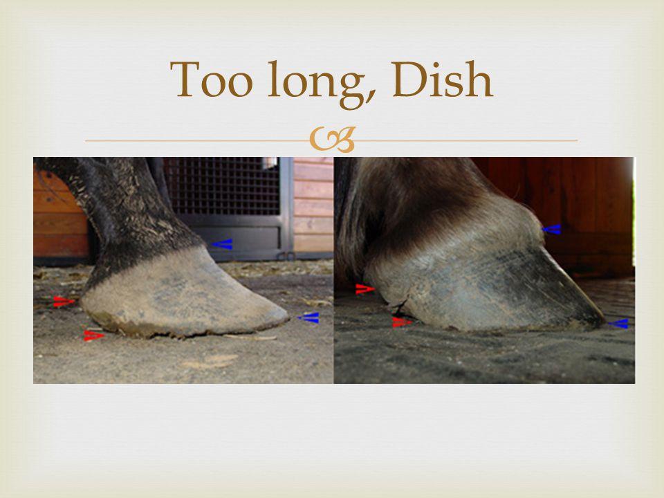  Too long, Dish
