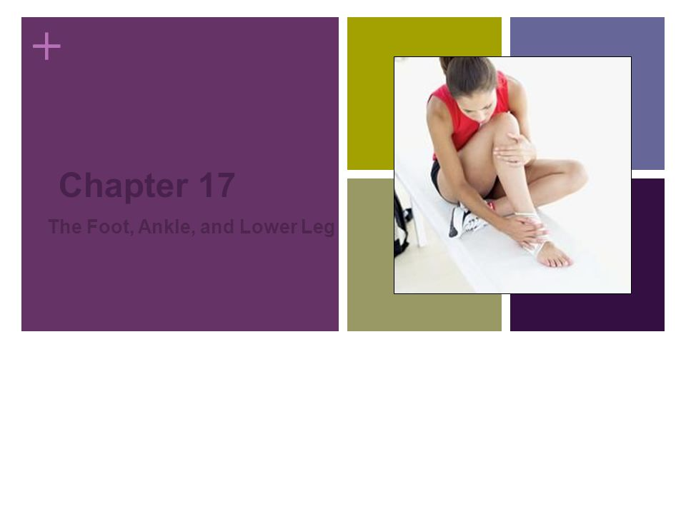 + Chapter 17 The Foot, Ankle, and Lower Leg