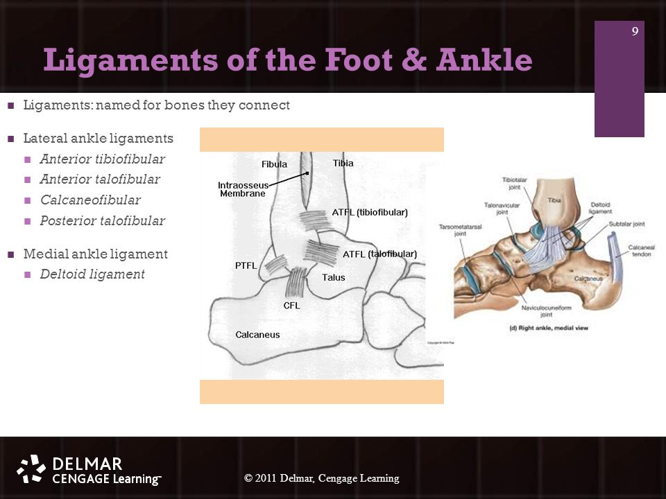 © 2010 Delmar, Cengage Learning 30 © 2011 Delmar, Cengage Learning Additional Tests for the Foot, Ankle, and Lower Leg Standard methods of testing various structures of the lower extremity: Anterior Drawer Test (anterior talofibular lig.) Plantar Fascia Test (plantar fasciitis) Talar Tilt Test (calcaneofibular lig.) Tinel's Sign (nerve entrapment) Thompson Test (Achilles tendon rupture) 30