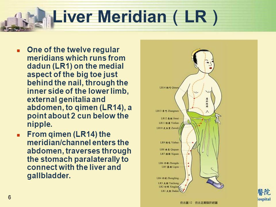 6 Liver Meridian ( LR ) One of the twelve regular meridians which runs from dadun (LR1) on the medial aspect of the big toe just behind the nail, thro