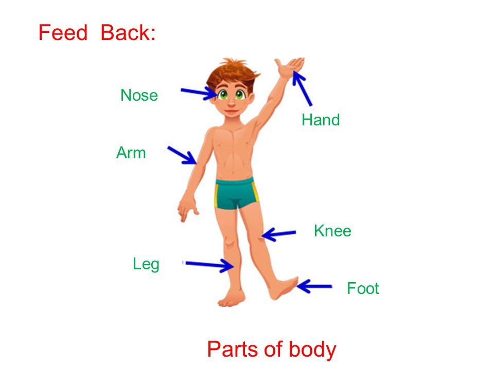 Hand Nose Arm Knee Leg Foot Parts of body Feed Back: