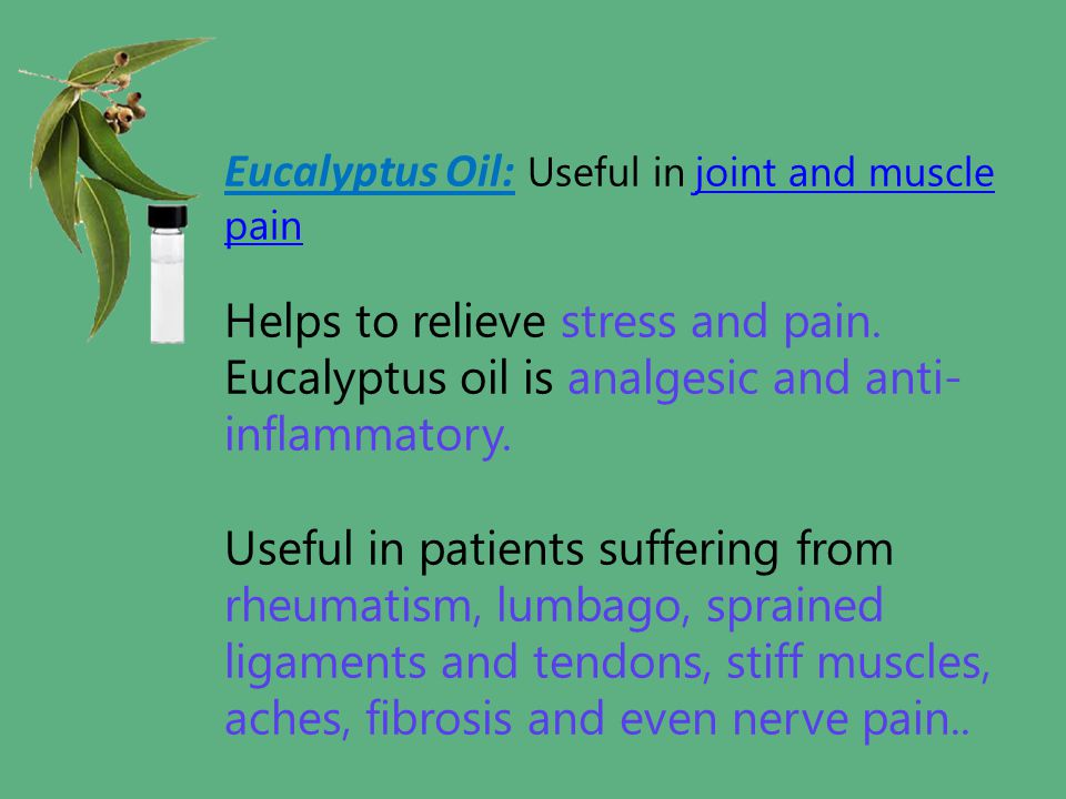 Eucalyptus Oil: Useful in joint and muscle pain joint and muscle pain Helps to relieve stress and pain. Eucalyptus oil is analgesic and anti- inflamma