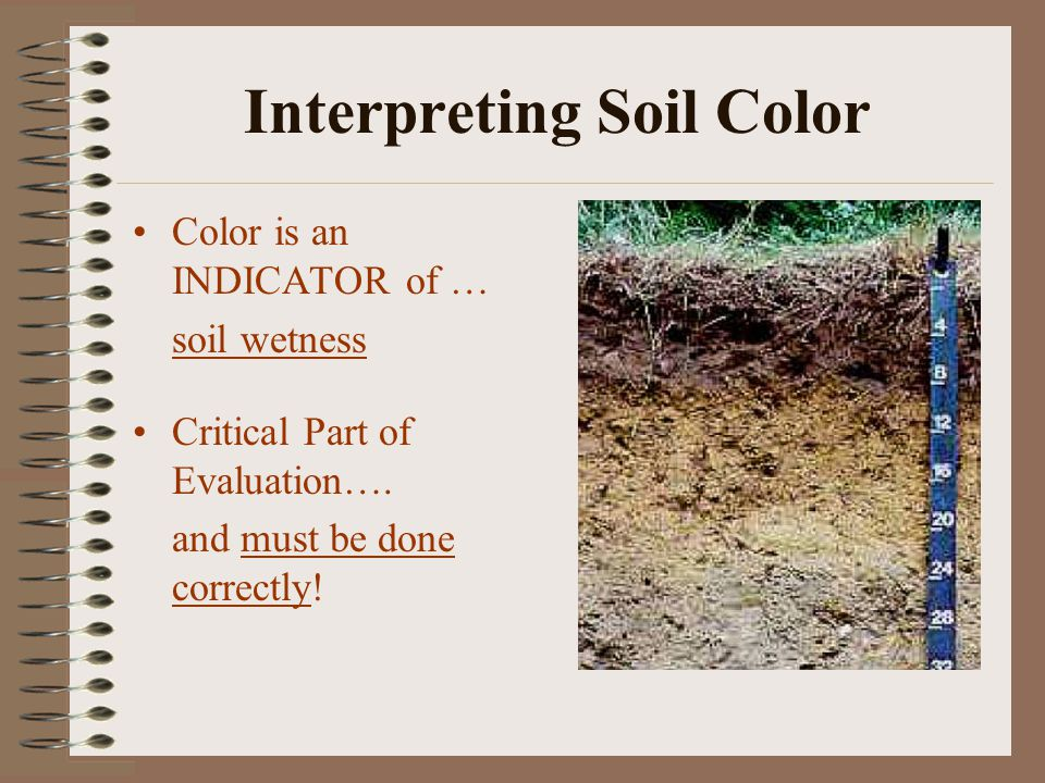 Interpreting Soil Color Color is an INDICATOR of … soil wetness Critical Part of Evaluation….
