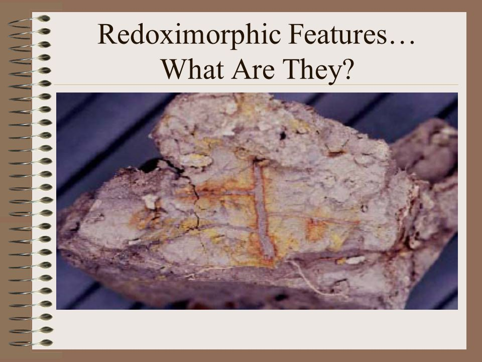 Redoximorphic Features… What Are They?