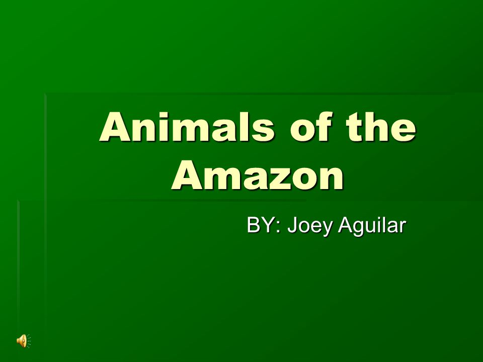 Animals of the Amazon BY: Joey Aguilar
