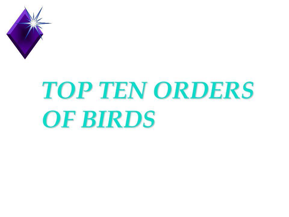 TOP TEN ORDERS OF BIRDS