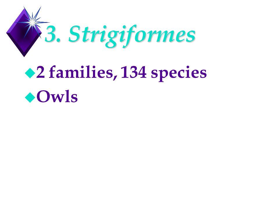 3. Strigiformes u 2 families, 134 species u Owls