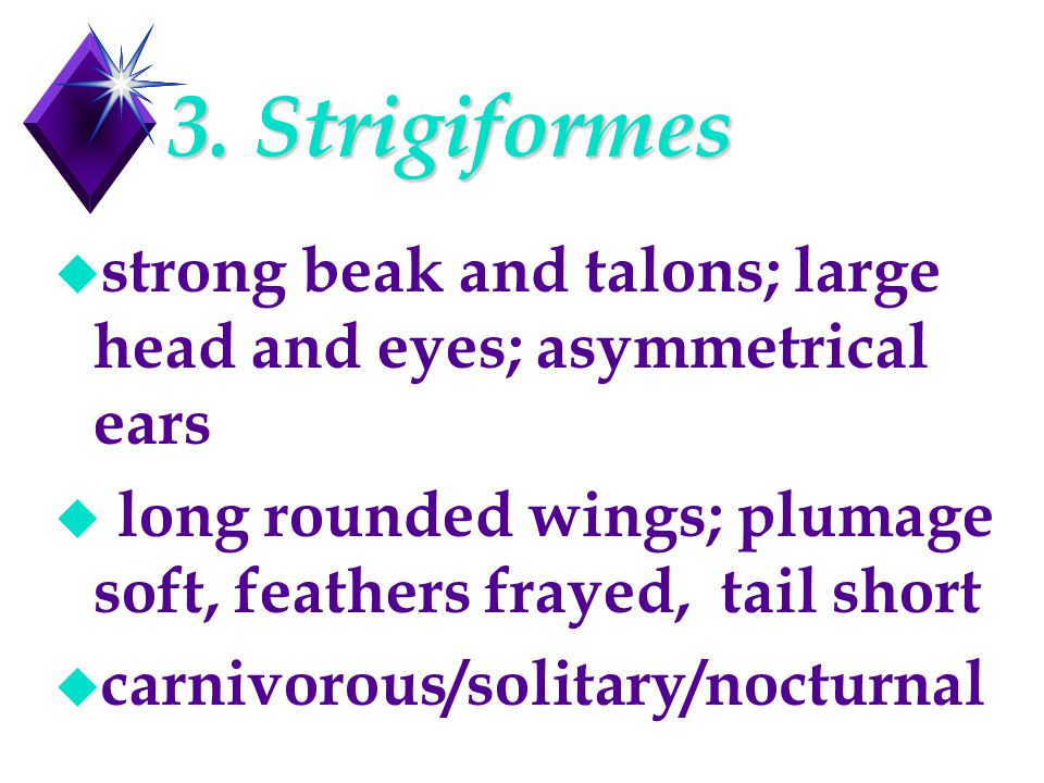 3. Strigiformes u strong beak and talons; large head and eyes; asymmetrical ears u long rounded wings; plumage soft, feathers frayed, tail short u car