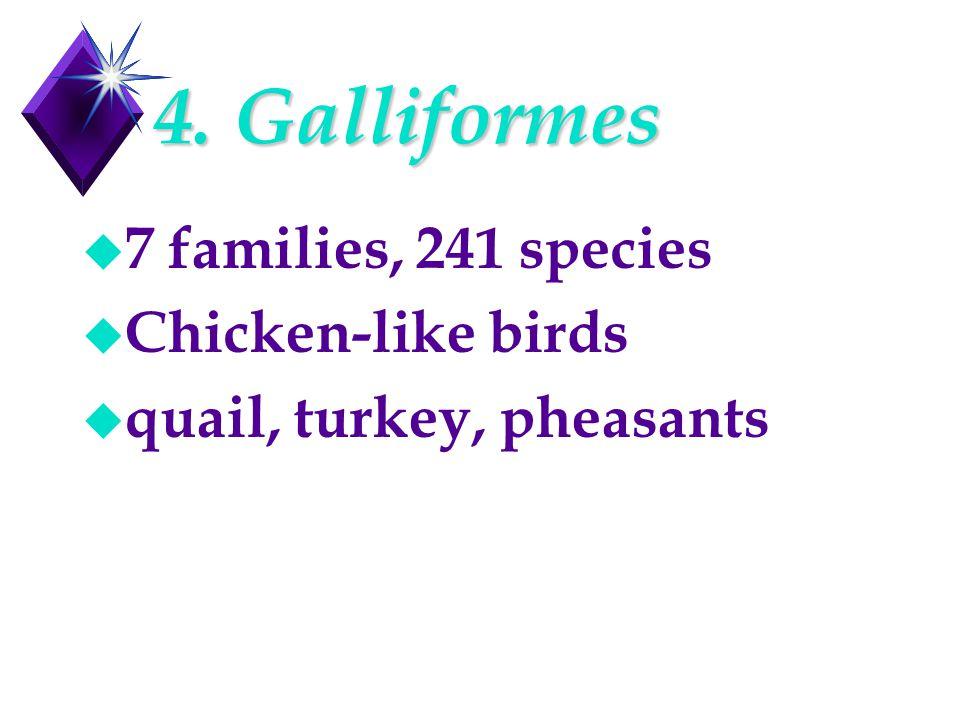 4. Galliformes u 7 families, 241 species u Chicken-like birds u quail, turkey, pheasants