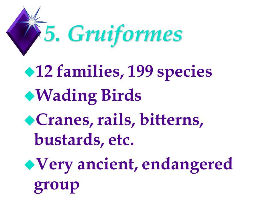 5. Gruiformes u 12 families, 199 species u Wading Birds u Cranes, rails, bitterns, bustards, etc. u Very ancient, endangered group