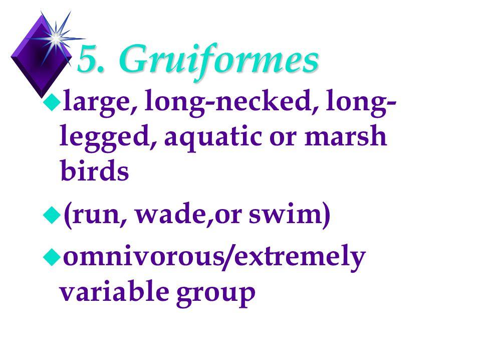 5. Gruiformes u large, long-necked, long- legged, aquatic or marsh birds u (run, wade,or swim) u omnivorous/extremely variable group