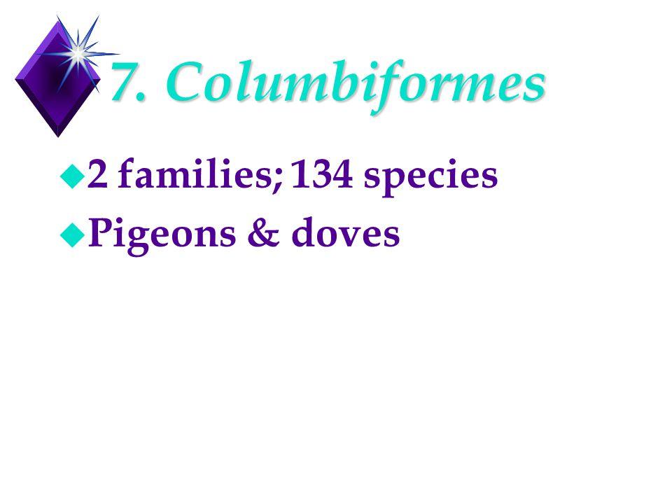 7. Columbiformes u 2 families; 134 species u Pigeons & doves