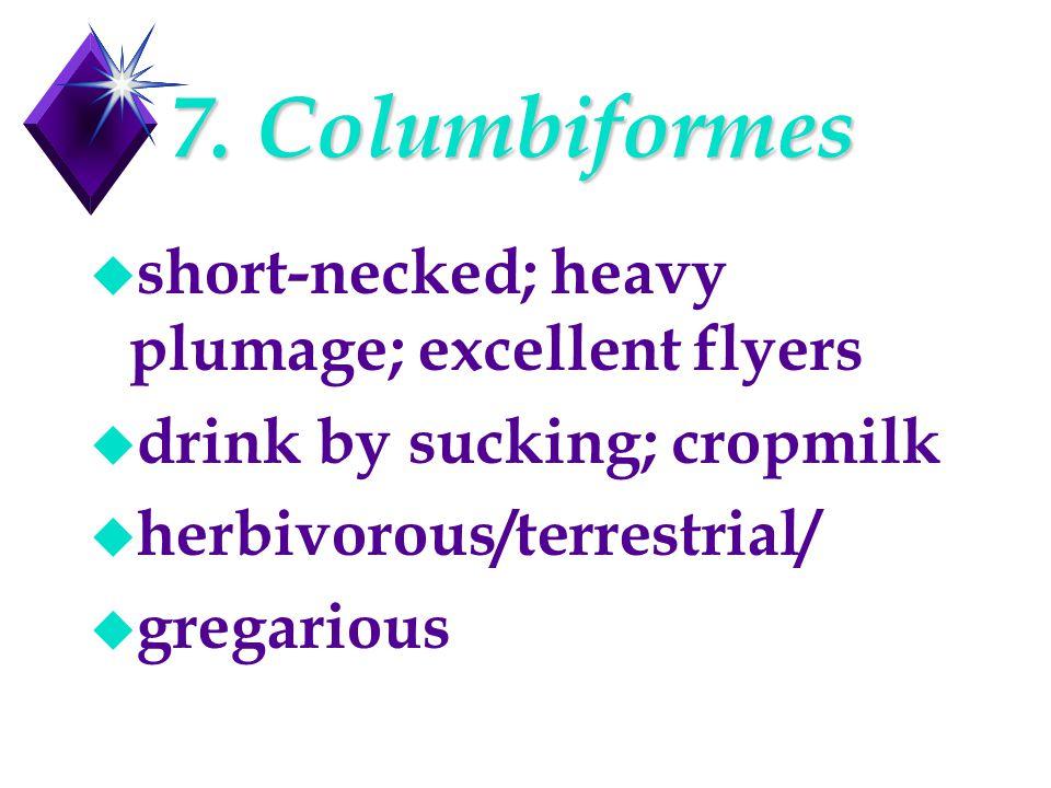 7. Columbiformes u short-necked; heavy plumage; excellent flyers u drink by sucking; cropmilk u herbivorous/terrestrial/ u gregarious