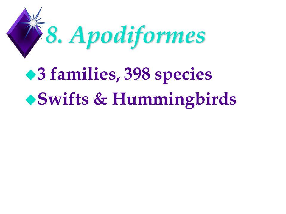 8. Apodiformes u 3 families, 398 species u Swifts & Hummingbirds