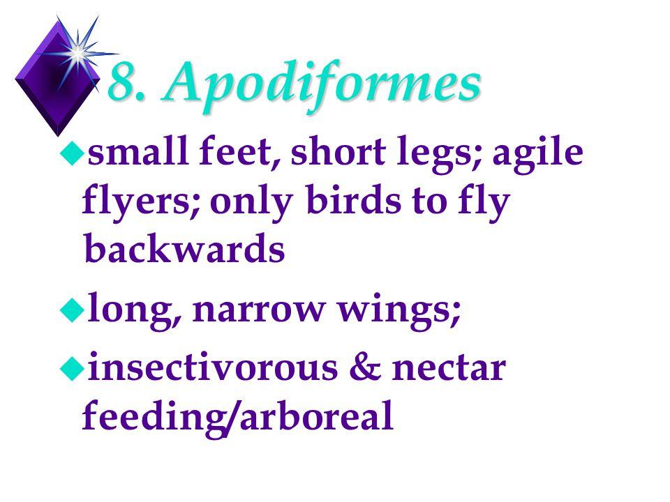 8. Apodiformes u small feet, short legs; agile flyers; only birds to fly backwards u long, narrow wings; u insectivorous & nectar feeding/arboreal
