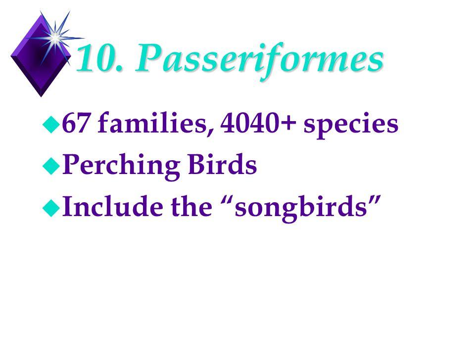 "10. Passeriformes u 67 families, 4040+ species u Perching Birds u Include the ""songbirds"""