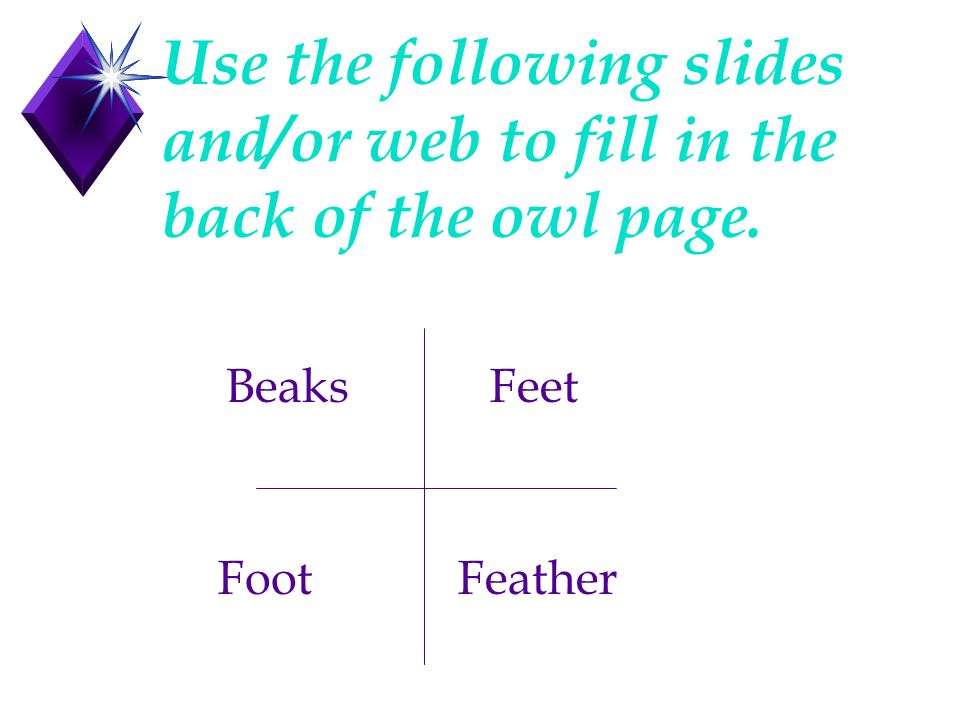Use the following slides and/or web to fill in the back of the owl page. BeaksFeet FootFeather