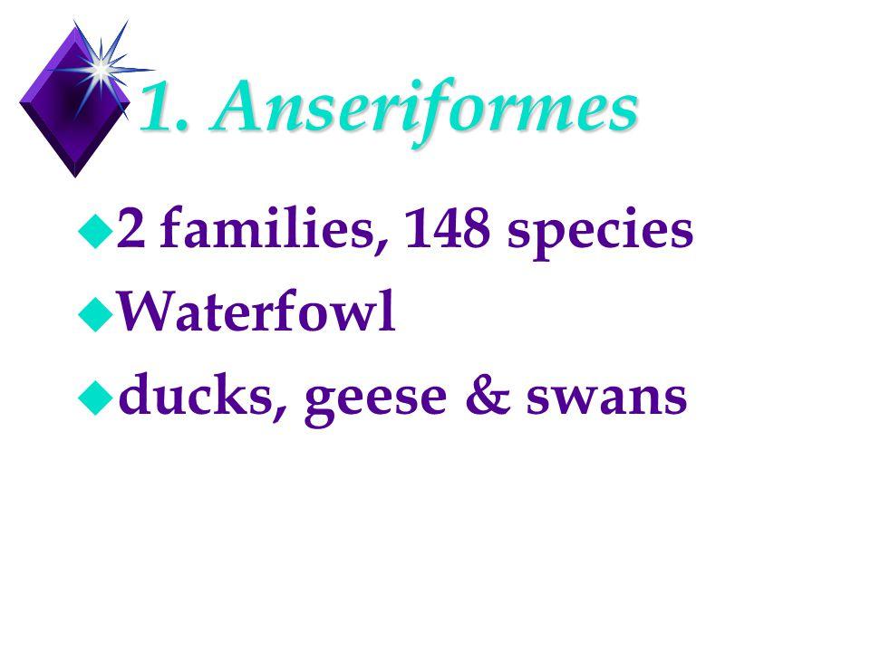 1. Anseriformes u 2 families, 148 species u Waterfowl u ducks, geese & swans