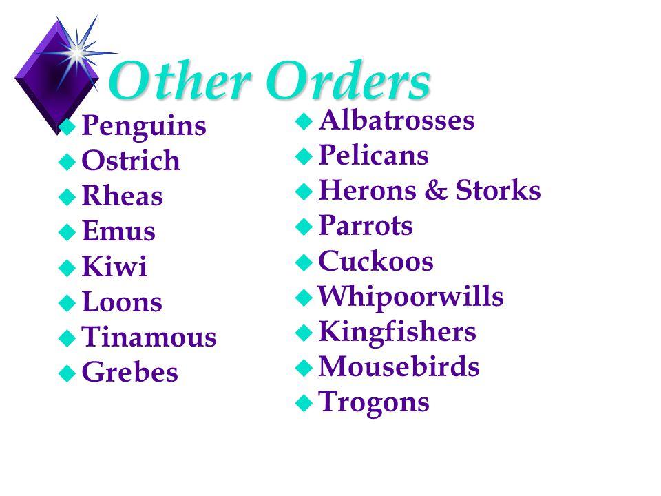 Other Orders u Penguins u Ostrich u Rheas u Emus u Kiwi u Loons u Tinamous u Grebes u Albatrosses u Pelicans u Herons & Storks u Parrots u Cuckoos u Whipoorwills u Kingfishers u Mousebirds u Trogons
