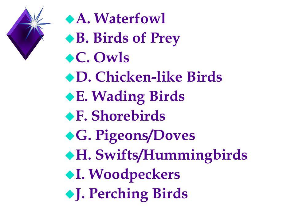 u A. Waterfowl u B. Birds of Prey u C. Owls u D. Chicken-like Birds u E. Wading Birds u F. Shorebirds u G. Pigeons/Doves u H. Swifts/Hummingbirds u I.