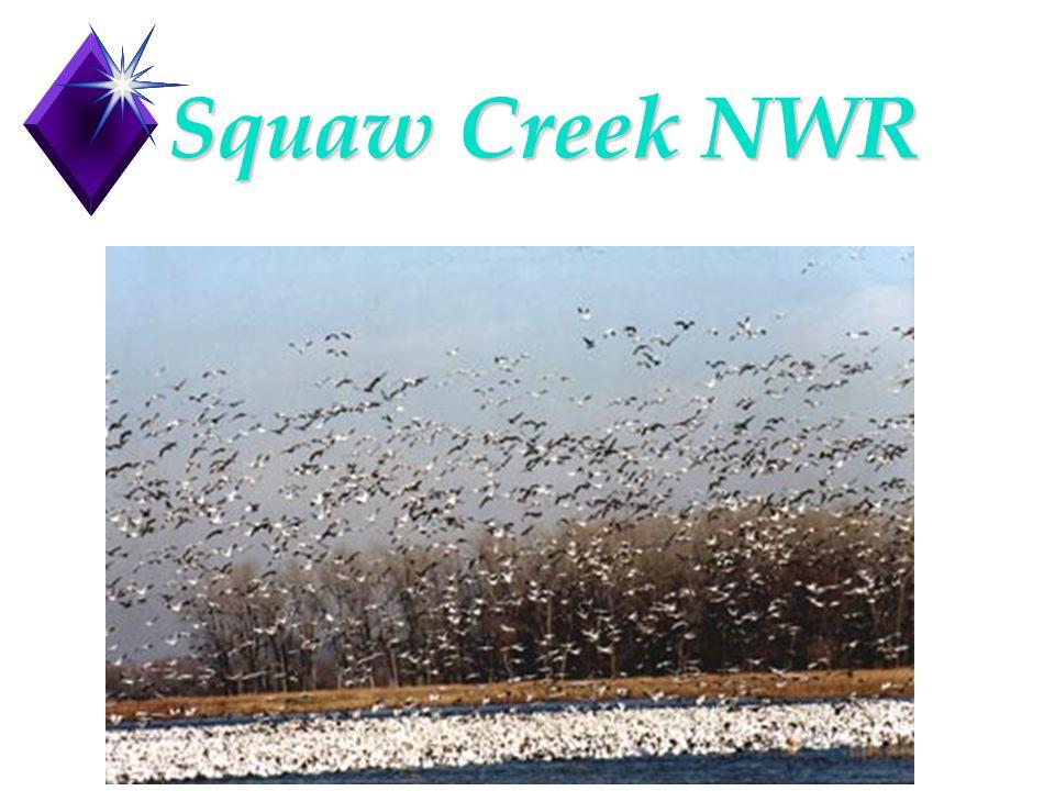 Squaw Creek NWR