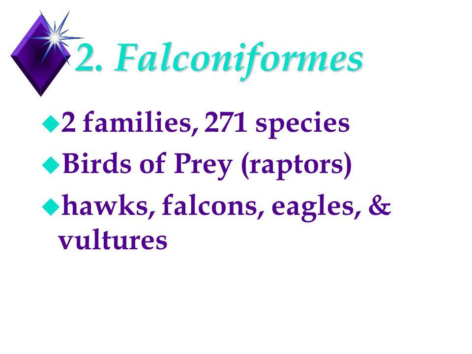 2. Falconiformes u 2 families, 271 species u Birds of Prey (raptors) u hawks, falcons, eagles, & vultures