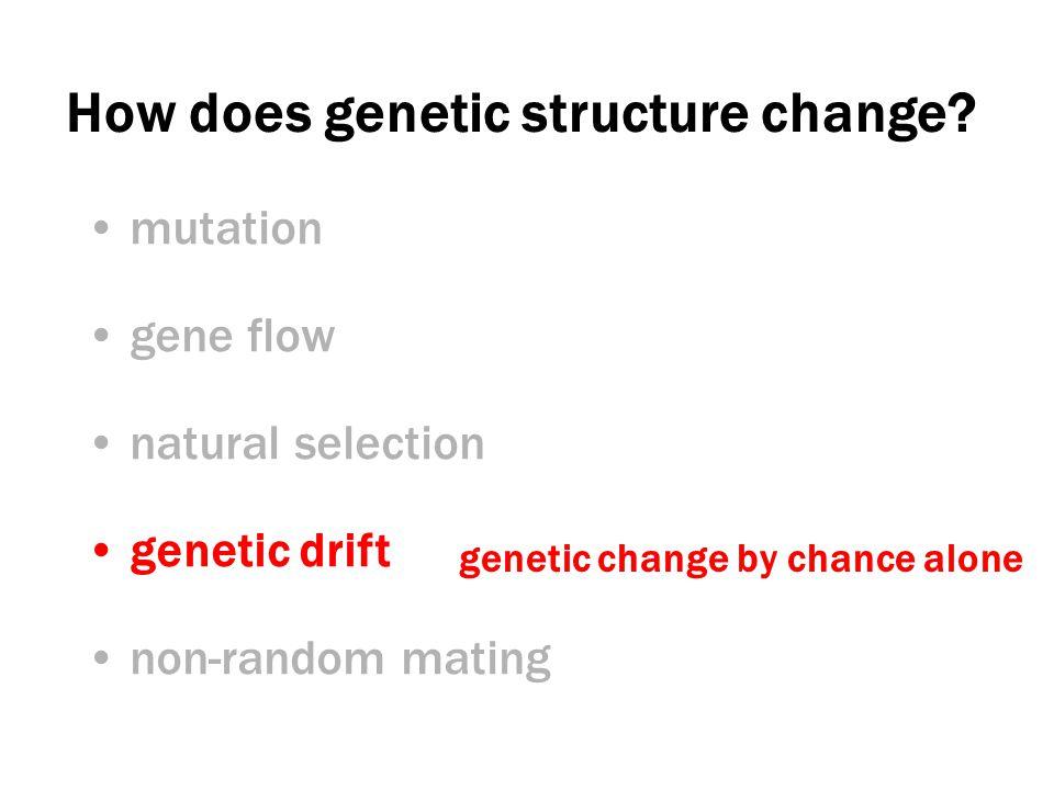 Genetic drift 8 RR 8 rr Before: After: 2 RR 6 rr 50% R 50% r 25% R 75% r