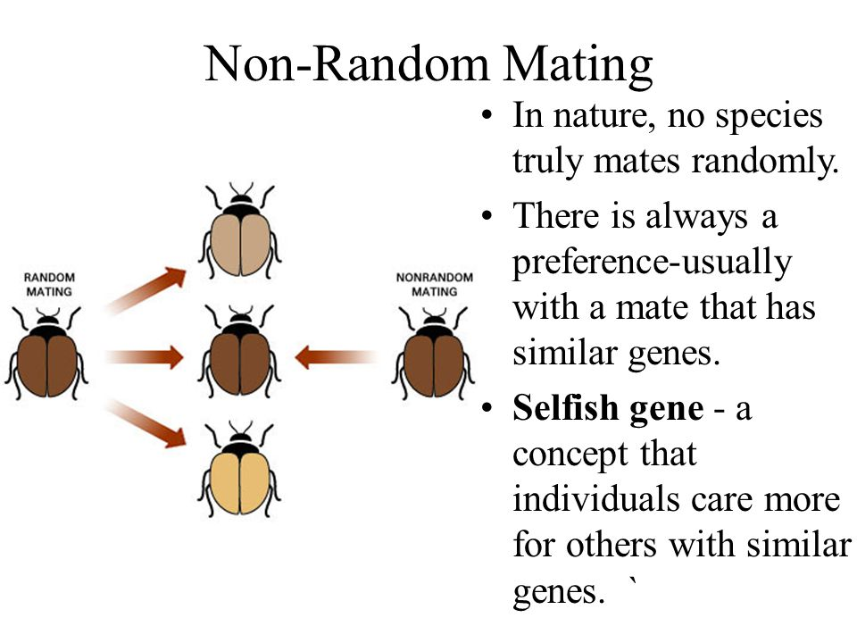 Non-Random Mating In nature, no species truly mates randomly.