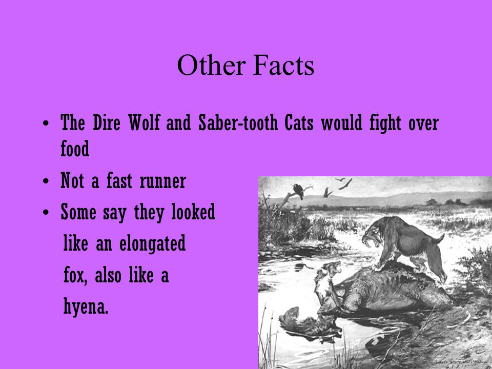 Other Facts The Dire Wolf and Saber-tooth Cats would fight over food Not a fast runner Some say they looked like an elongated fox, also like a hyena.