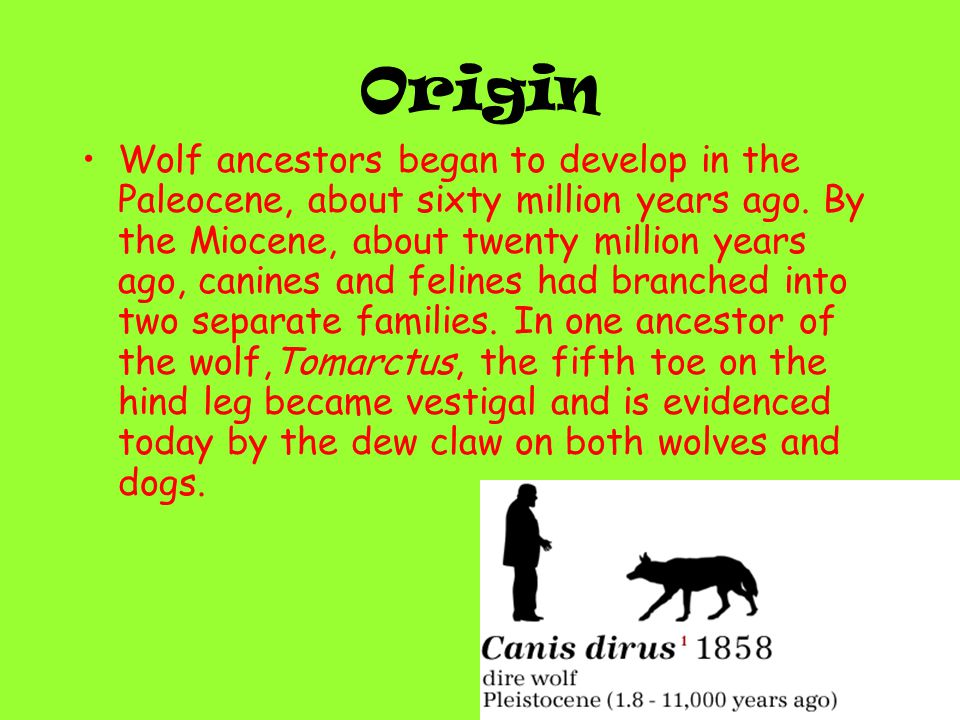 The Dire Wolf was 5 feet long and about 175 pounds.