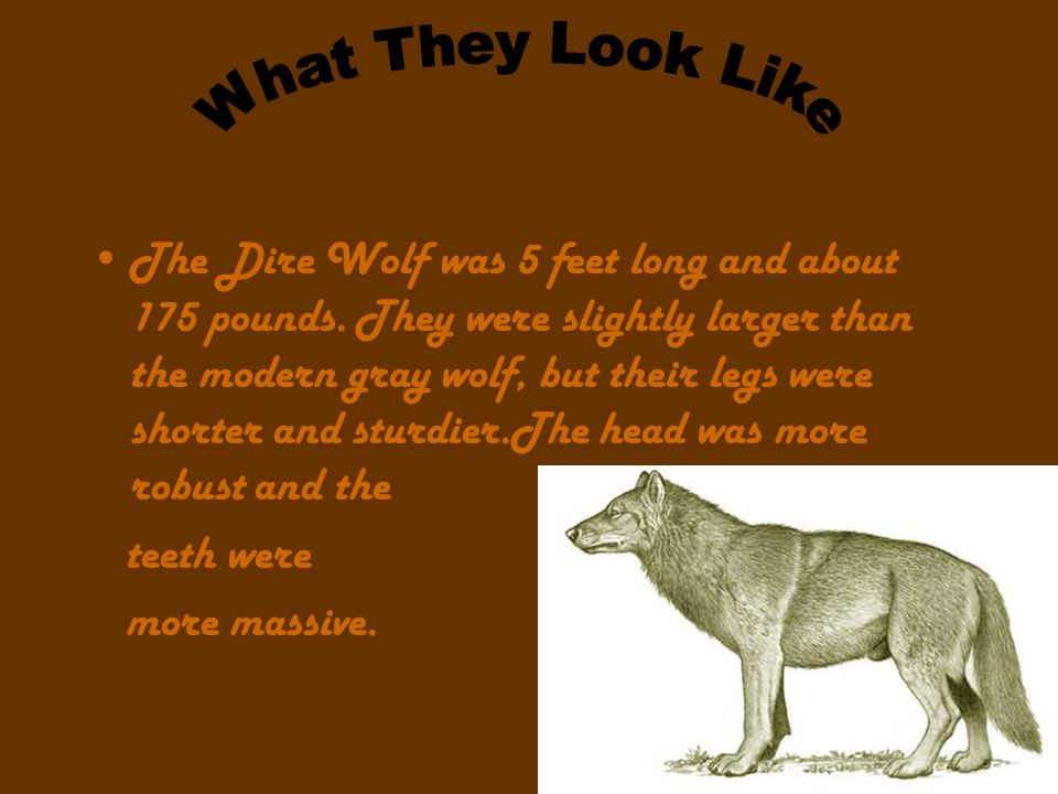 How They Lived that dire wolves may have made their living in similar ways to the modern hyenas.