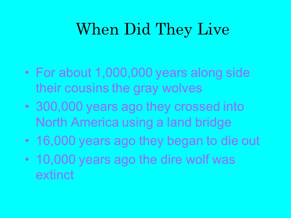 For about 1,000,000 years along side their cousins the gray wolves 300,000 years ago they crossed into North America using a land bridge 16,000 years ago they began to die out 10,000 years ago the dire wolf was extinct When Did They Live