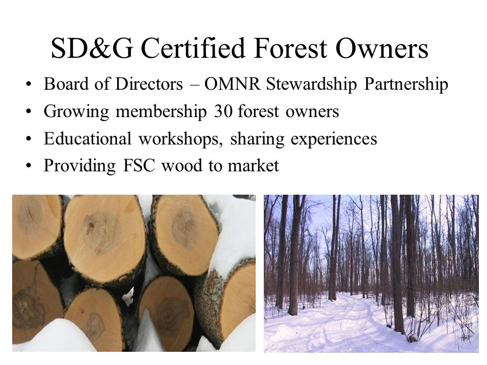 SD&G Certified Forest Owners Board of Directors – OMNR Stewardship Partnership Growing membership 30 forest owners Educational workshops, sharing expe