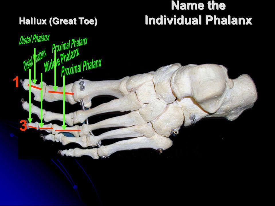 Name the Individual Phalanx 3 Hallux (Great Toe) 1