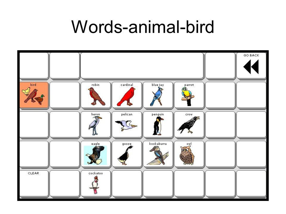 Words-animal-bird