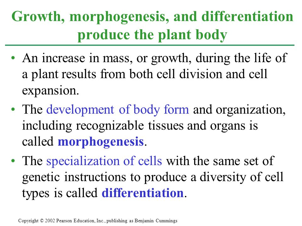 An increase in mass, or growth, during the life of a plant results from both cell division and cell expansion. The development of body form and organi