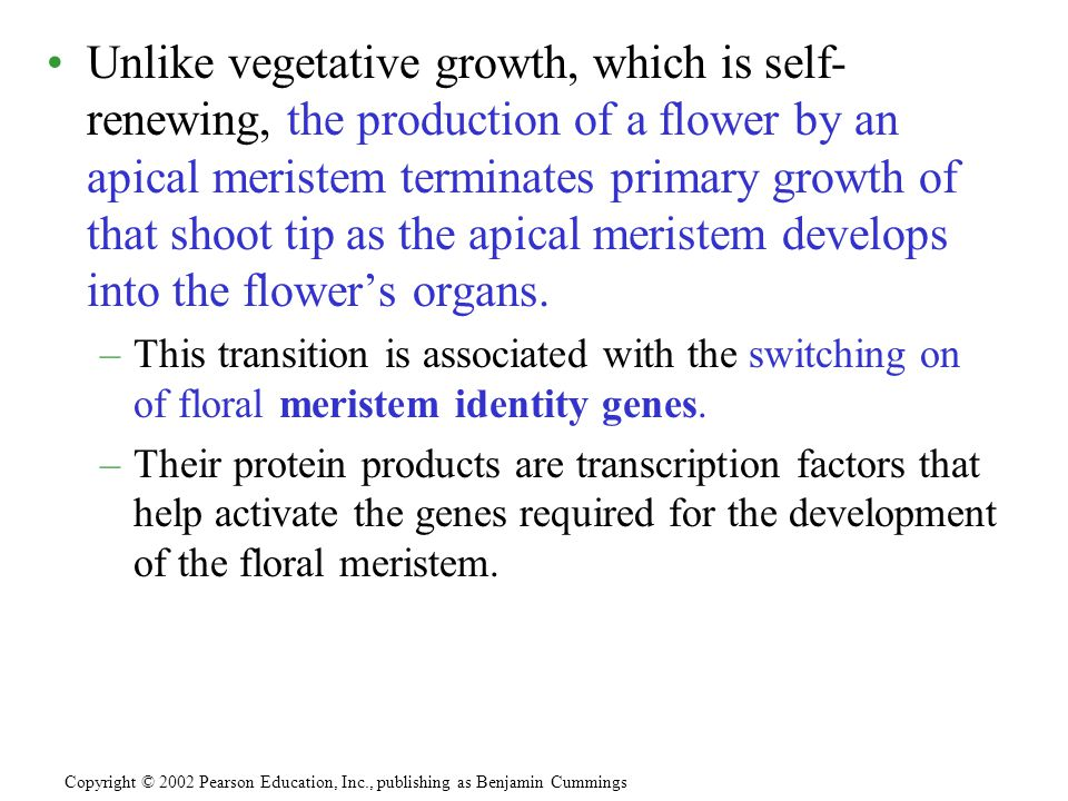 Unlike vegetative growth, which is self- renewing, the production of a flower by an apical meristem terminates primary growth of that shoot tip as the