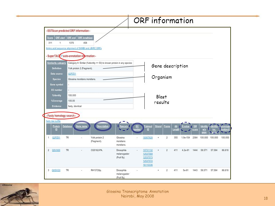 Glossina Transcriptome Annotation Nairobi, May 2008 18 ORF information Gene description Organism Blast results