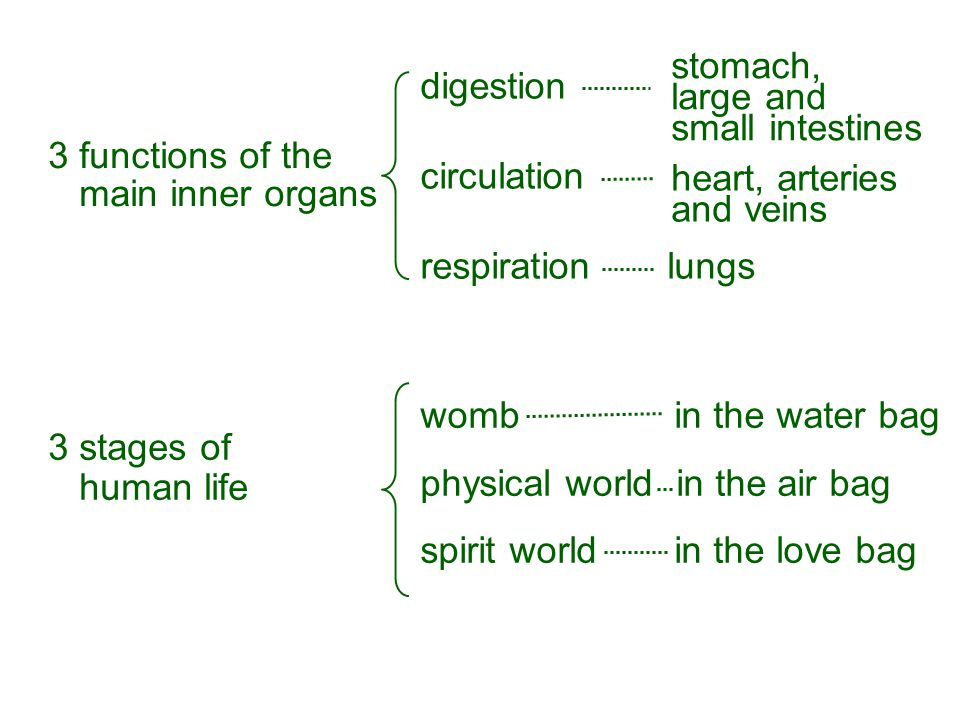 digestion circulation respiration lungs stomach, large and small intestines heart, arteries and veins 3 functions of the main inner organs 3 stages of human life womb in the water bag physical world in the air bag spirit world in the love bag