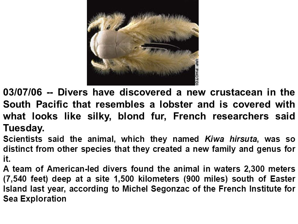 03/07/06 -- Divers have discovered a new crustacean in the South Pacific that resembles a lobster and is covered with what looks like silky, blond fur