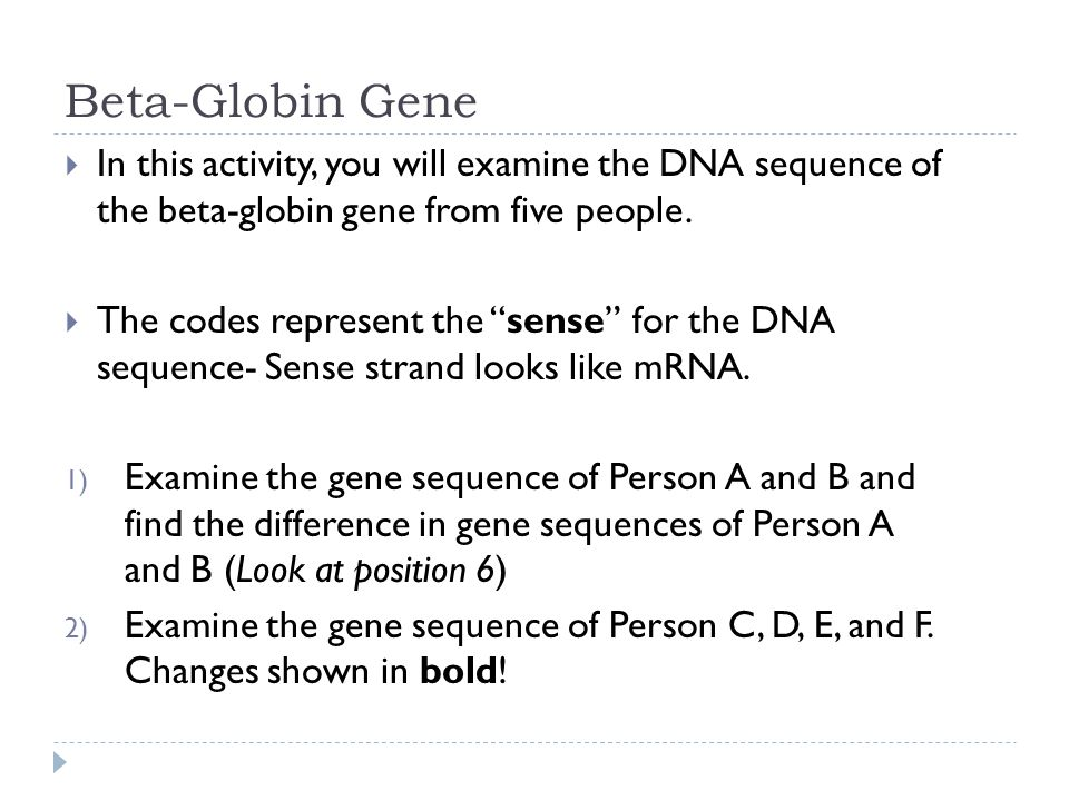 Beta-Globin Gene  In this activity, you will examine the DNA sequence of the beta-globin gene from five people.