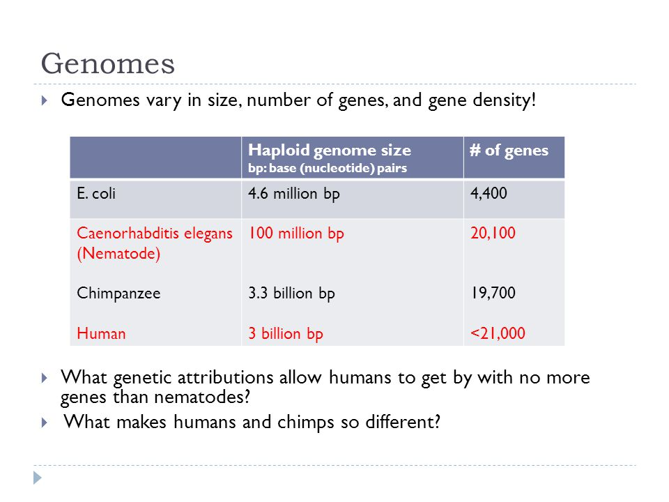 Genomes  Genomes vary in size, number of genes, and gene density.