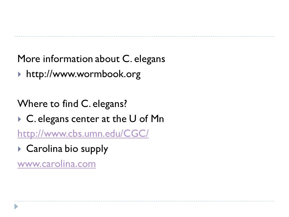 More information about C. elegans  http://www.wormbook.org Where to find C.