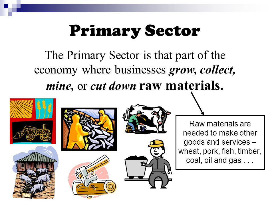 Primary Sector The Primary Sector is that part of the economy where businesses grow, collect, mine, or cut down raw materials.
