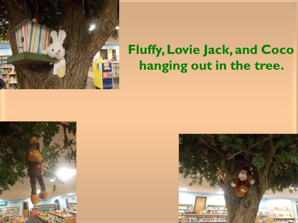 Fluffy, Lovie Jack, and Coco hanging out in the tree.