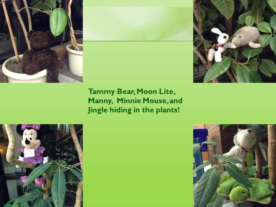 Tammy Bear, Moon Lite, Manny, Minnie Mouse, and Jingle hiding in the plants!