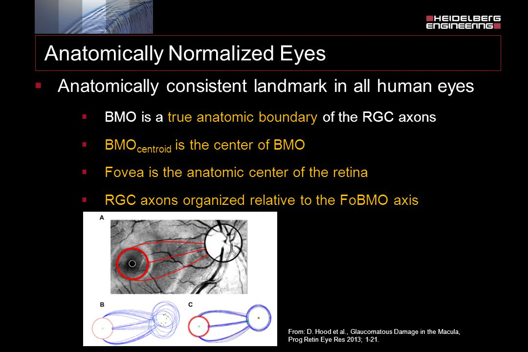  Anatomically consistent landmark in all human eyes  BMO is a true anatomic boundary of the RGC axons  BMO centroid is the center of BMO  Fovea is the anatomic center of the retina  RGC axons organized relative to the FoBMO axis From: D.